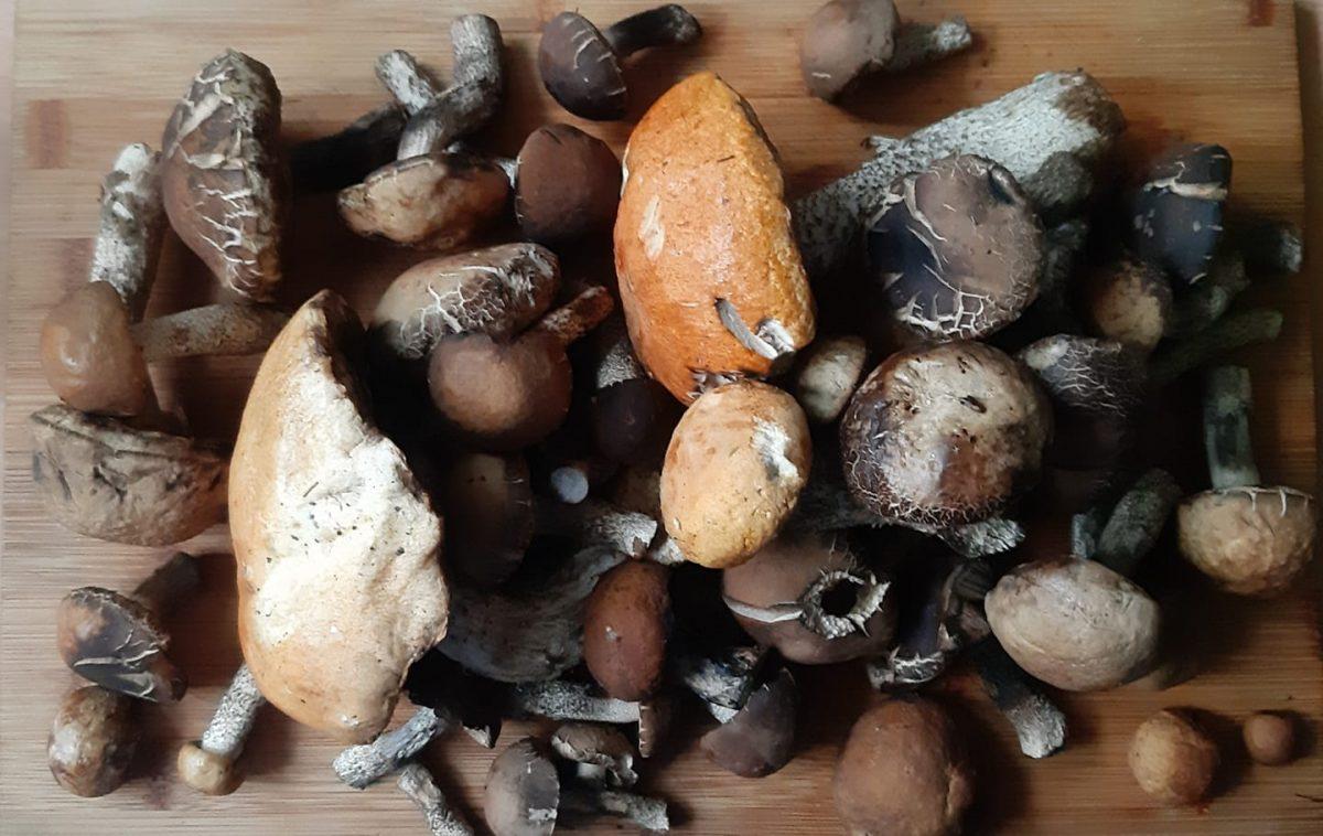 Nie zrywaj grzybów, któych nie znasz. Służba leśna może to uznać za niszczenie grzybów i nałożyć mandat.