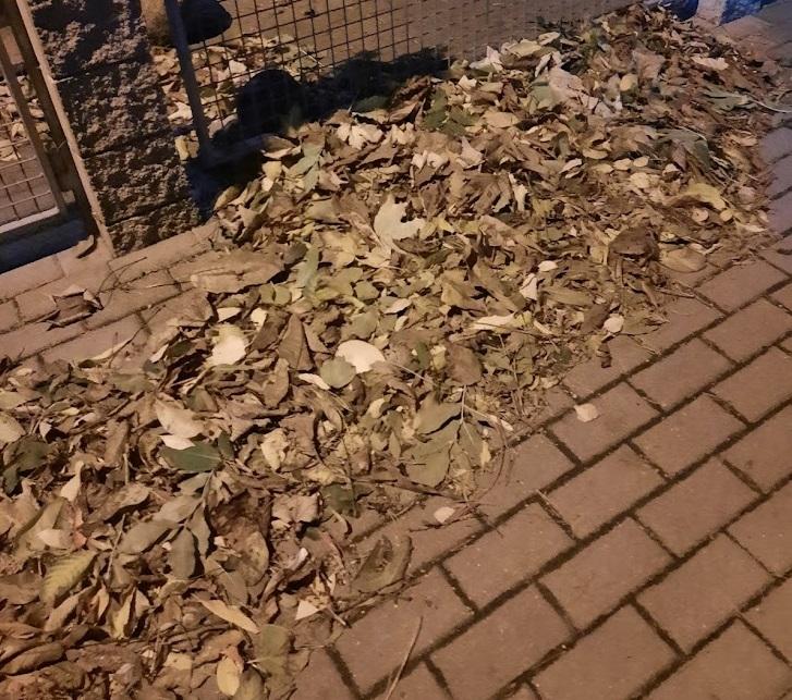 Wiatry się kończą. Od poniedziałku straże gminne zainteresują się stertami nawianych liści. Posprzątaj. Inaczej zapłacisz mandat.